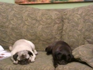 Ripley and MayBelle, looking worn out by the fact that they didn't get any coffee cake.
